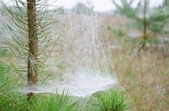Spinnennetze auf dem Baum lizenzfreie stockbilder