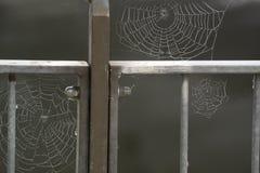 Spinnennetze auf dem Eisenzaun Stockbild