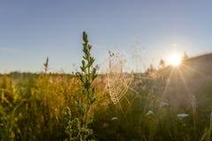 Spinnennetze auf dem Gras bei Sonnenaufgang Stockfotografie