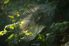 Spinnennetze in den Tropfen des Regens auf Hintergrund von Bäumen Lizenzfreie Stockfotografie