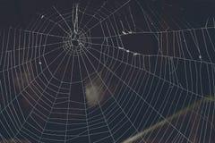 Spinnennetzisolat lizenzfreie stockbilder
