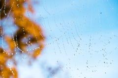 Spinnennetznetz mit schönen Regentautropfen Stockfoto