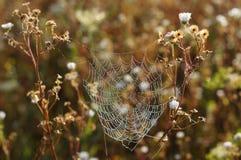Spinnennetzspitze Lizenzfreie Stockbilder
