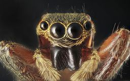 Spinnenporträt lizenzfreie stockfotografie