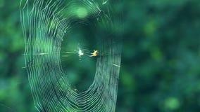Spinnenrealzeit stock footage