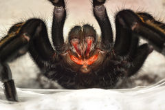 Spinnenreißzähne Lizenzfreie Stockfotos