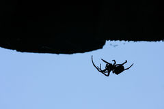 Spinnenschattenbild stockfotografie