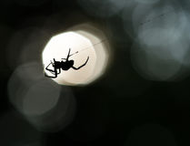 Spinnenschattenbild auf einem Netz Lizenzfreie Stockfotos