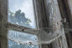 Spinnenspinnennetz auf altem Fenster lizenzfreies stockbild