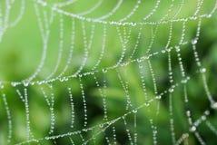 Spinnenweb Stockfotos