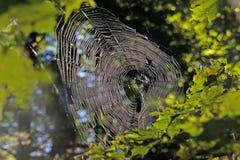 Spinnenweb stockfotografie