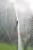 Spinnenweb. Stockfotografie