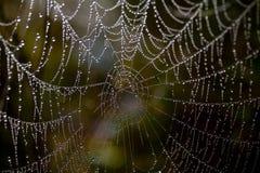 Spinnenweb   Lizenzfreies Stockfoto