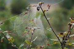 Spinnenweb Royalty-vrije Stock Foto