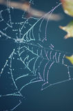 Spinnenweb Lizenzfreie Stockfotografie