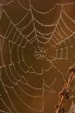 Spinnenweb auf einer Wiese am Sonnenaufgang Lizenzfreies Stockfoto