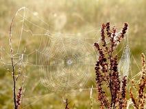 Spinnenweb auf einer Wiese am Sonnenaufgang Stockbilder