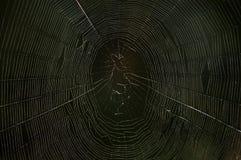 Spinnenweb in der Dunkelheit Stockfoto