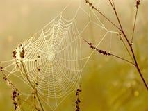 Spinnenweb am Herbstsonnenaufgang Stockfotografie