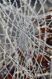 Spinnenweb mit Frost Stockfoto
