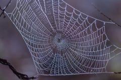 Spinnenweb mit Morgentau Stockfoto