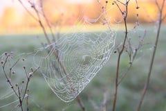 Spinnenweb mit Morgentau Lizenzfreies Stockbild