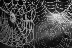 Spinnenweb mit Tau Stockfotografie
