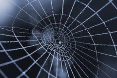 Spinnenweb mit Tautropfen Stockfotografie