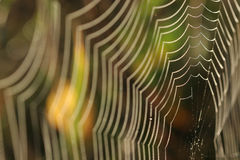 Spinnenweb mit Tautropfen Stockbilder