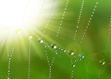 Spinnenweb mit Tautropfen Stockbild
