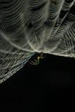 Spinnenweb und Spinne Stockfotografie