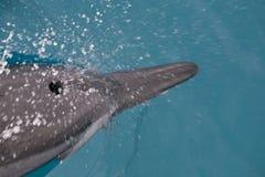 Spinner-Delphin nimmt einen Atem 2 Stockfotos