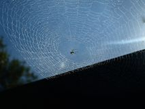 Spinneweb 001 Royalty-vrije Stock Afbeeldingen