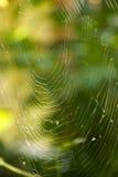 Spinneweb Royalty-vrije Stock Afbeelding
