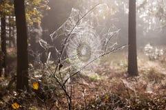 Spinneweb 1 Stock Afbeeldingen
