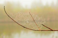 Spinneweb Stock Afbeeldingen