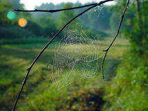 Spinneweb. Royalty-vrije Stock Afbeeldingen