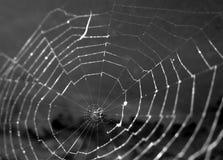 Spinneweb stock afbeelding