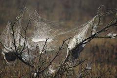 Spinneweb als magisch wordt uitgespreid die Royalty-vrije Stock Afbeeldingen