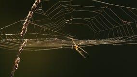 Spinneweb bij achterlicht stock video