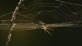 Spinneweb bij achterlicht stock videobeelden