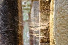 Spinneweb bij de zonsondergangbezinning royalty-vrije stock afbeelding