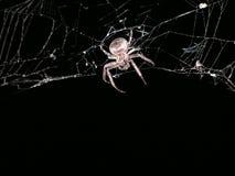 Spinneweb bij nachttextuur Stock Afbeelding