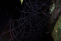 Spinneweb in dark Stock Foto's