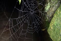 Spinneweb in dark Royalty-vrije Stock Foto