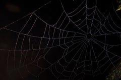 Spinneweb in dark Royalty-vrije Stock Fotografie