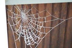 Spinneweb dat in Hoar-Vorst wordt behandeld Stock Afbeelding