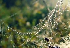Spinneweb, dauw. Royalty-vrije Stock Foto