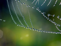 Spinneweb, dauw. Stock Foto
