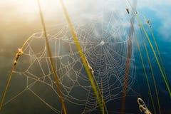 Spinneweb in dauwdalingen wordt behandeld, kleurrijke achtergrond die royalty-vrije stock afbeeldingen